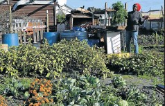 ??  ?? People celebrate their gardens in Langa, Cape Town, above and below, on Garden Day 2017.