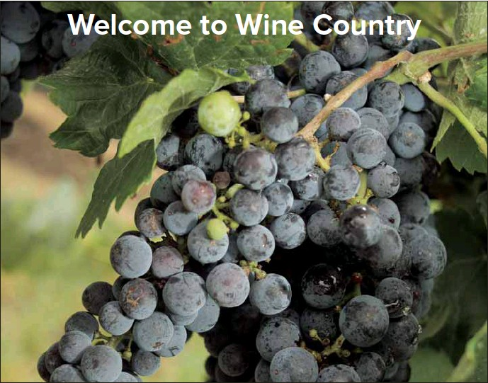 ??  ?? NOT JUST WINE: Many wineries offer more than just wine these days.