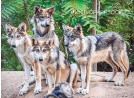 ?? COURTESY OF NEW MEXICO BIOPARK SOCIETY ?? Four Mexican gray wolf pups that were born at the BioPark Zoo in May.