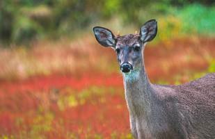 """??  ?? 4. 5. 5. Vista Hermosa """"Lo más bonito de ir a la reserva natural Vista Hermosa de Monquentiva fue ver los venados y fotografiarlos. Nos pudimos acercar bastante y ver sus cachitos""""."""
