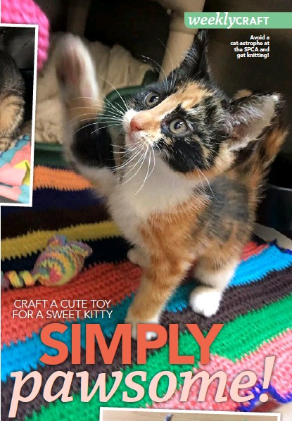 ??  ?? Avoid a cat-astrophe at the SPCA andget knitting!