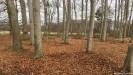 ??  ?? Absurdität als Konzept: Der Waldboden wird erst vom Laub befreit und dann wieder zugekehrt