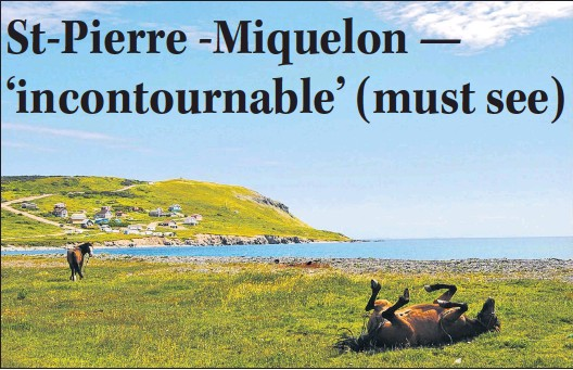 """?? WENDY ROSE PHOTO ?? Looking towards the Route du fond de L'anse, at the base of """"Le Cap,"""" one of the many horses of Miquelon shows its appreciation of the warm mid-july weather."""