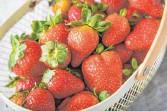 ?? FOTO: CHRISTIN KLOSE/DPA ?? Erdbeeren für den Kuchen sollten möglichst erntefrisch sein.