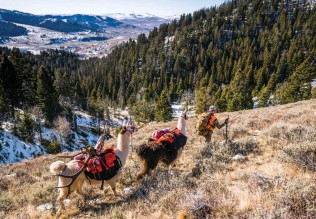 ??  ?? A string of pack llamas can be real lifesavers, and loyal companions, on a backcountry adventure.