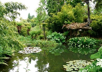 ??  ?? One of the ponds in the exotic jungle garden