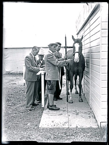 ??  ?? A horse is prepped before the Royal Highland Show in Dundee in June 1957