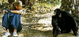 ??  ?? Primate concern... COP26 advocate Dr Jane Goodall with male chimp Figan in Gombe National Park, Tanzania