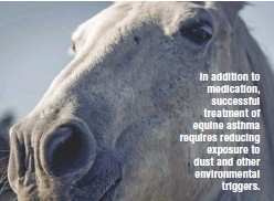 ??  ?? In addition to medication, successful treatment of equine asthma requires reducing exposure to dust and other environmental triggers.