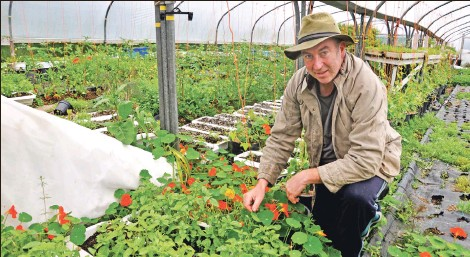 ?? 01_A28_robin_01 ?? Robin Gray tends his vegetables in a polytunnel at his allotment.