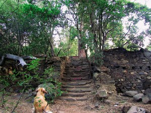 ??  ?? Stairway to yesterday One of the most fascinating ruins I've come across is De Grendel, a beautifully built stone structure that is rapidly deteriorating at the top of Deer Park in Cape Town. Now hidden under thick bushes and trees, the house was...