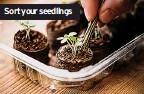 ??  ?? Sort your seedlings