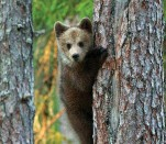 ??  ?? My photo of our treed interloper was too fuzzy to print. But this is pretty much it.