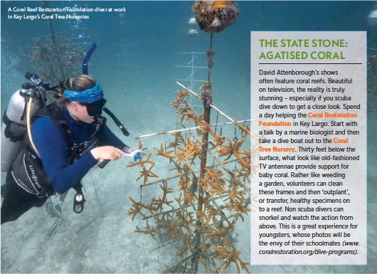 ??  ?? A Coral Reef Restoration Foundation diver at work in Key Largo's Coral Tree Nurseries