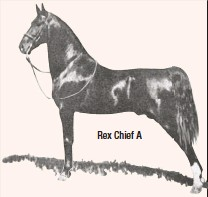 ??  ?? Rex Chief A