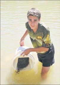 ??  ?? Fishing club member Jordan Hall releasing the fingerlings at McLean Beach.