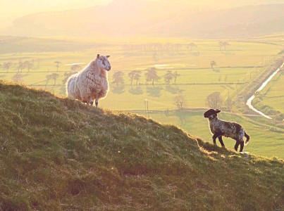 ??  ?? GOOD FOR THE PLANET: The upland livestock sector must put across a clear message backed up by data
