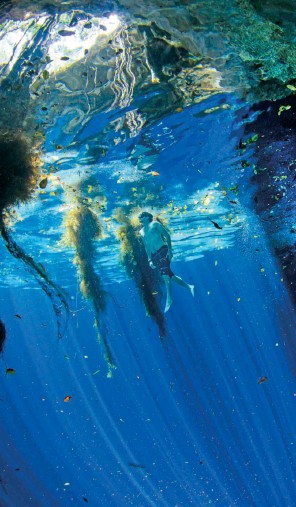 Pwshymi Se/ñuelos de Pesca Luminoso Anzuelo de Calamar en la Oscuridad Bombilla Luminosa Se/ñuelos Suaves para curric/án Cebo Aparejos de Pesca Agua Salada