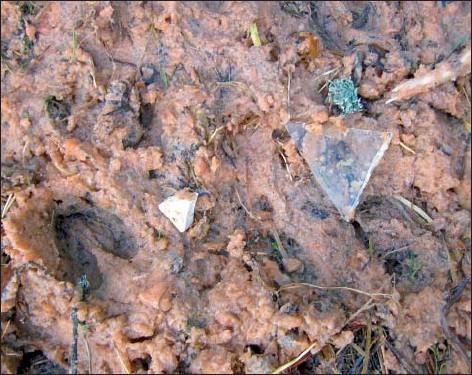 ?? Foto: Privat ?? Glas och porslin. Föremål som inte hör hemma i djurfoder har hittats vid en utfodringsplats i Wattkast i Korpo.