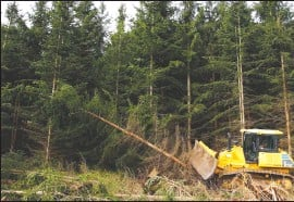 """?? Associated Press photo ?? A bulldozer knocks down non-native trees in Monongahela National Forest, W.Va., on Aug. 26, 2019. After miners left West Virginia's Cheat Mountain in the 1980s, there was an effort to green the coal mining sites to comply with federal law. Companies planted """"desperation species"""" — grasses with shallow roots or non-native trees that could endure, but wouldn't reach their full height or restore the forest as it had been."""