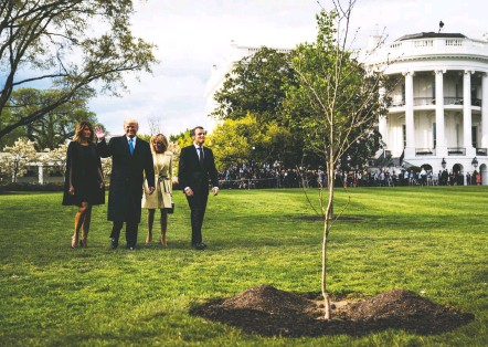 ?? JABIN BOTSFORD/THE WASHINGTON POST ?? President Trump and Melania Trump walk with France's Emmanuel Macron and his wife, Brigitte, near the friendship oak on the South Lawn of the White House in April 2018. The tree was uprooted and subjected to a normal quarantine for a plant brought into the country.