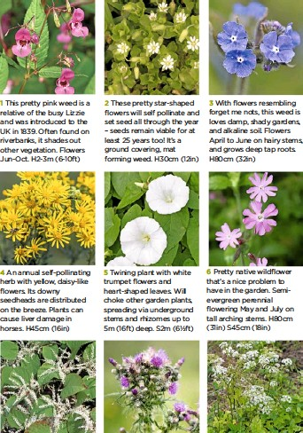 Pressreader Garden Answers Uk 2017 03 29 Recognise These