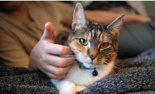 ??  ?? Holly är normalt en väldigt social och tillgiven katt, men efter misshandeln har hon blivit skyggare.