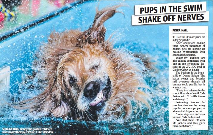 ??  ?? SHAGGY DOG: Bobby the golden retriever loves hydrothera­py. Picture: Luke Marsden