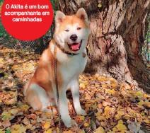 ??  ?? O Akita é um bom acompanhante em caminhadas