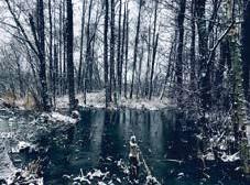 ?? FOTO: CAROLINE SKOOG MILUTINOVIC ?? FROST. Caroline Skoog Milutinovic fångade denna frostiga bild vid Fysingens naturreservat.