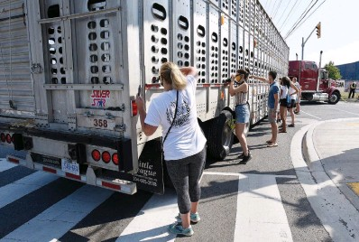 ?? JOHN RENNISON THE HAMILTON SPECTATOR ?? Protesters rush to feed water to pigs in the two minutes trucks stop outside the gates while carrying the animals into Fearmans Pork slaughterhouse in Burlington — the site of weekly vigils organized by Toronto Pig Save.