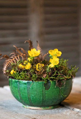 ??  ?? The uncurling petals of sunny aconites nestle in a bed of dried bracken and moss to create a piece of the woodland within a green ceramic bowl.
