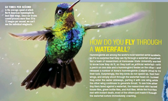 ??  ?? 50 TIMES PER SECOND is the average speed at which North American hummingbirds beat their wings. Since our brains cannot process more than 10 to 12 images per second, we can't see the individual wingbeats.