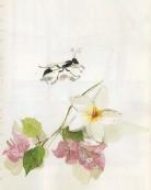 ??  ?? Aquarelle de Marc peinte au Kenya : fourmi, branche de bougainvillier et fleur de frangipanier Watercolour by Marc, Kenya: ant, bougainvillea branch andPlumeria flower