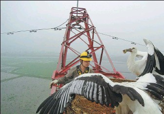 ?? PHOTOS PROVIDED TO CHINA DAILY ?? From left: A maintenance worker from the Huangshi subsidiary of the State Grid Corp of China feeds oriental white storks nesting on a high-voltage transmission tower in Huangshi, Hubei province, in 2016. Zheng Qingsong (left) and his colleague observe birds nesting on a tower during a regular patrol.