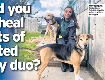 ??  ?? BEST BUDDIES: Canine Carer Gabrielle Mahil is pictured with JJ and Bipper