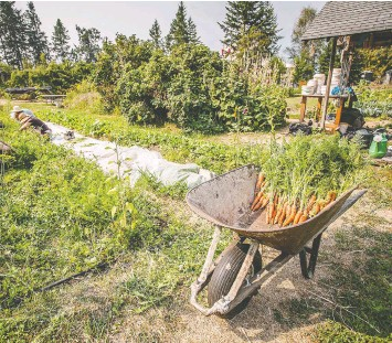 ??  ?? This vegetable garden produces nearly a third of the food served at the ashram.