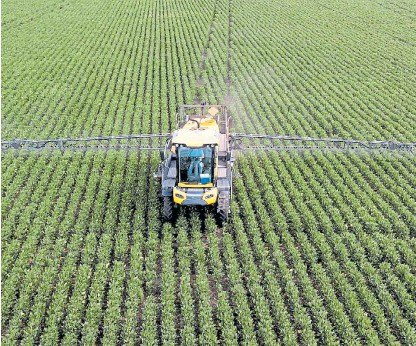 ??  ?? Bajo la lupa. El herbicida fue prohibido en algunas ciudades y es el principal blanco de grupos ambientalistas.