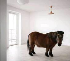 ?? FOTO: SIMPLERPHOTO ?? STORT INTRESSE. Kan en häst göra att fler potentiella köpare travar iväg på en lägenhetsvisning?