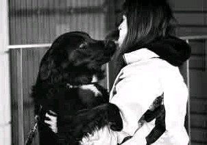 ??  ?? ORPHANED PETS A woman plays with a dog at an evacuation center on Thursday in Fukushima prefecture, Japan. The catastrophic earthquake and tsunami that struck Japan onMarch 11 have created a disaster not only for hundreds of thousands of people, but...