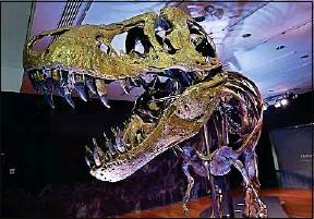 ??  ?? Les tyrannosaures et autres dinosaures ont disparu il y a 66 millions d'années.