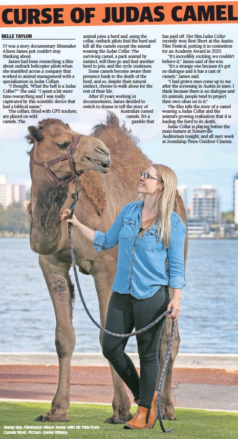 ??  ?? Hump day: Filmmaker Alison James with Mr Pink from Camels West. Picture: Daniel Wilkins
