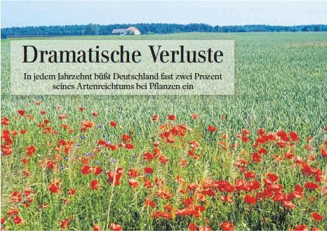 ?? FOTO: ROLAND KNAUER ?? Auch Allerweltsarten wie der Klatschmohn wurden seit den 1960er-Jahren deutschlandweit seltener, erst seit den 1990er-Jahren können sie sich durch Naturschutzmaßnahmen auf wenigen Flächen wie diesem Ackerrandstreifen in der Uckermark besser halten.