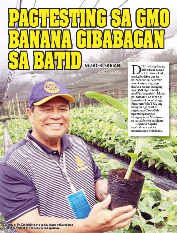 ??  ?? Gipakita ni Dr. Gus Molina ang usa ka tissue-cultured nga semilya sa Variant 218 sa nursery sa Lapanday.