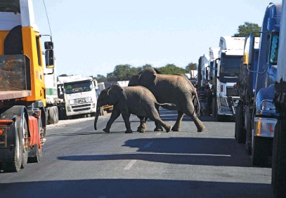 ?? Picture: AFP ?? WANDERING. Elephants crossing the road packed with the trucks waiting to cross the river over the Kazungula bridge in Kazungula, Botswana, on Monday.