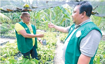 ?? (SUN.STAR FOTO/ALEX BADAYOS) ?? PREMIUM YIELD. Cocoa planter Grover Rosit (left) shows his Cebu partner Garry Hontiveros a sample of the UF 18 cacao high-yield variety during a visit in their nursery in Barili, Cebu.
