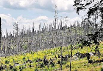 ?? Zbytky smrkového lesa po napadení kůrovcem v Česku. FOTO MAFRA - LADISLAV NĚMEC ?? Místo činu.