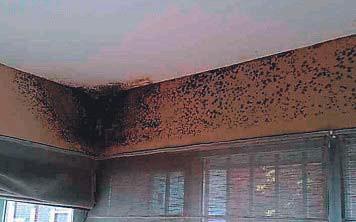 ??  ?? Problemas de humedades por condensación