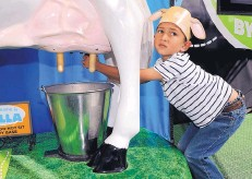 ??  ?? Hayden Mallak, 5, tries his hand at milking Bella — the mechanical cow in the Discovery Dairy Zone at the State Fair.