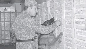 ??  ?? У каждой служивой собаки – своя специализация…